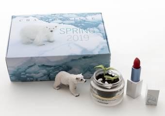香緹卡 - 北極熊植栽禮盒搶先開賣 愛美,更愛北極熊!守護行動再起