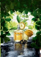 [新品] 歐舒丹L'OCCITANE  2009佛手柑茶香氛新品上市