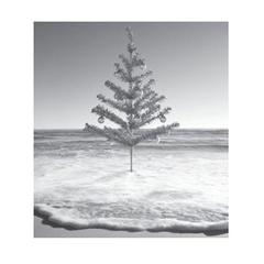 [限量] 好萊塢情境香氛品牌 APOTHIA 冬日香氛新品 歡樂假期情境香氛 打造幸福暖意的相聚時光
