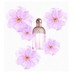 櫻花淡香水