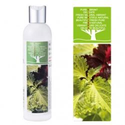 Vital SPA  洗髮-蕁麻控油平衡洗髮精