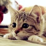 150x150 cat2