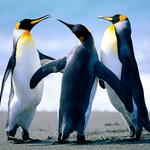 150x150 penguins